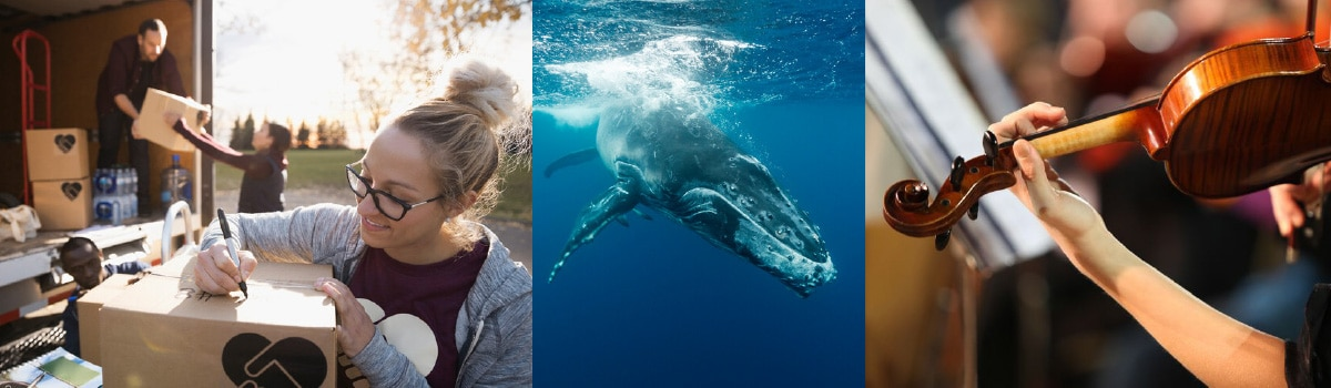 Collage with whale,